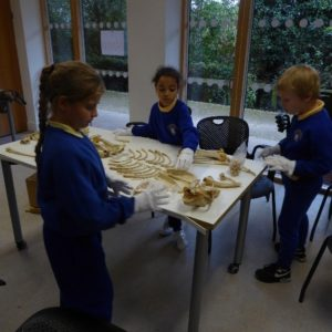 3 children wearing white gloves and sorting animal bones into an animal skeleton shape